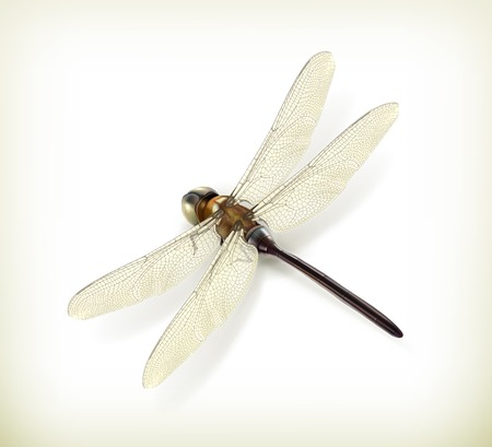 dragonfly wings: Dragonfly, realistic vector