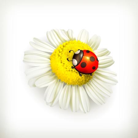 Ladybug and chamomile
