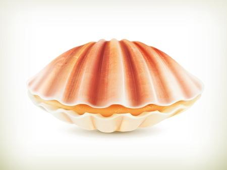 Seashell, high quality illustration Vector