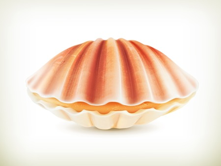 scallop shell: Seashell, high quality illustration