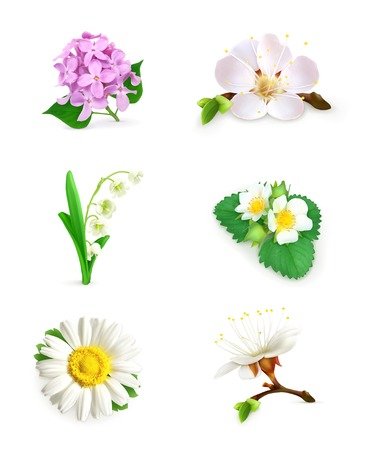 inflorescência: Spring flowers icon set