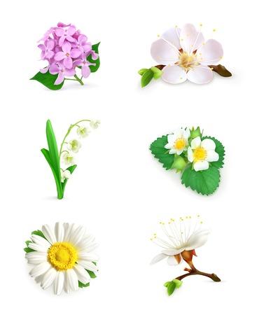 Spring flowers icon set