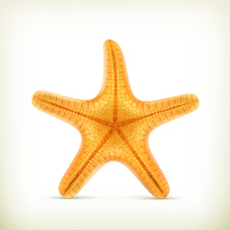 sea star: Starfish, realistic vector icons
