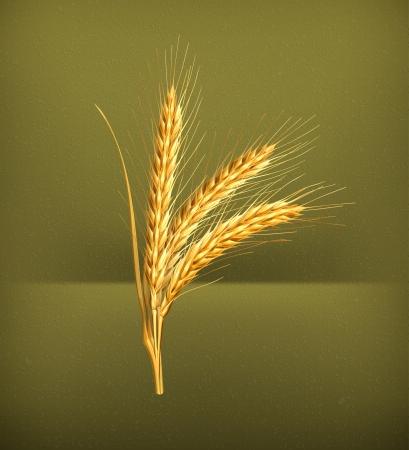 bran: Ears of wheat