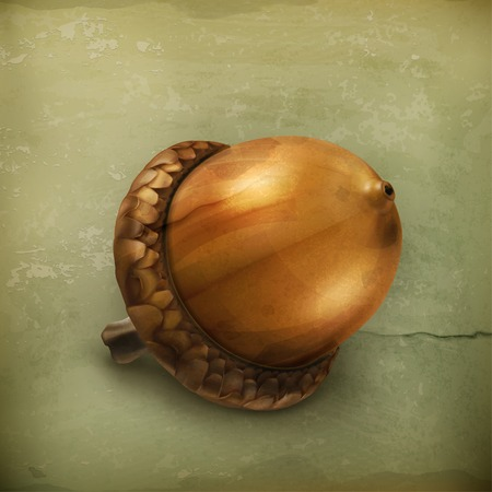 acorn seed: Acorn old style vector
