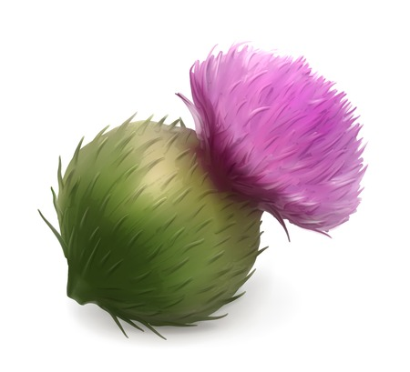 burdock: Burdock vector illustration
