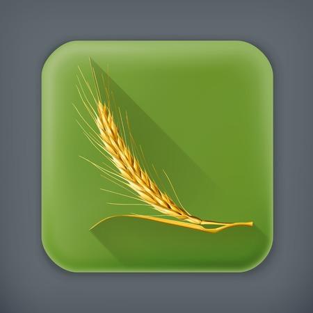 winter wheat: Ear of wheat, long shadow vector icon Illustration