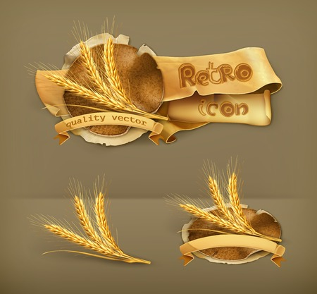 cebada: Espigas de trigo, icono vector