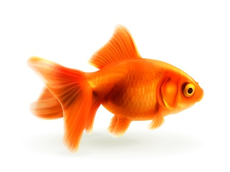 ichthyology: Goldfish photo realistic illustration