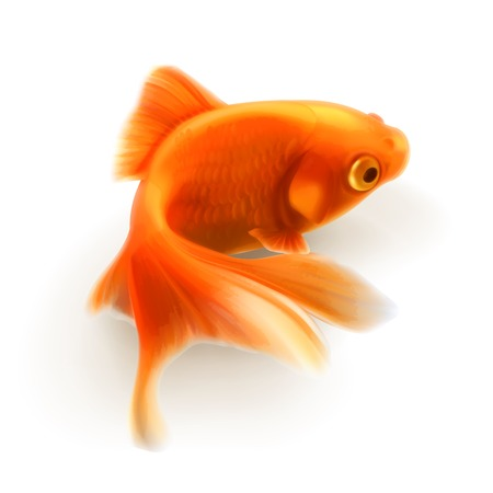 Goldfish photo realistic illustration