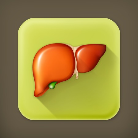 internal organ: Human liver long shadow icon
