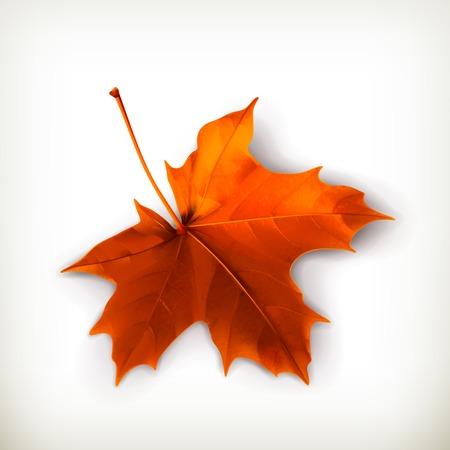 otoño: Hoja de arce Vectores