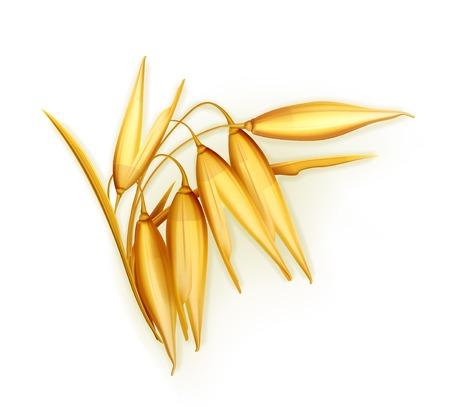 planta de maiz: Avena, ilustración