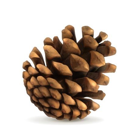 cedar tree: Pine cone vector illustration