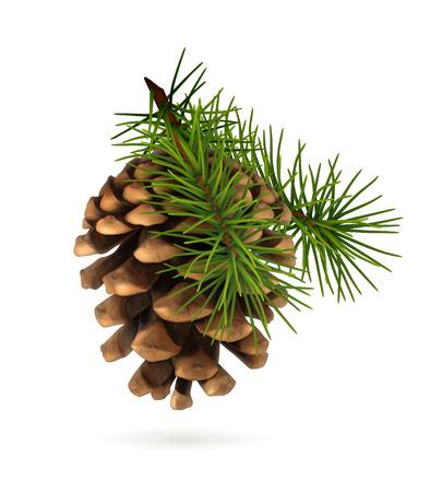 fir cone: Cono del pino con la rama Vectores