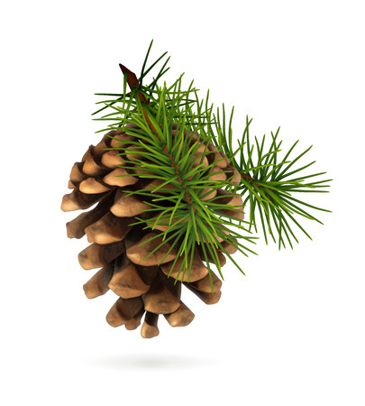 Pine cone with branch Çizim