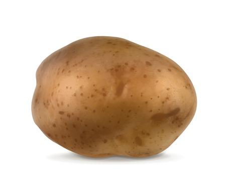 raw potato: Potato, vector illustration