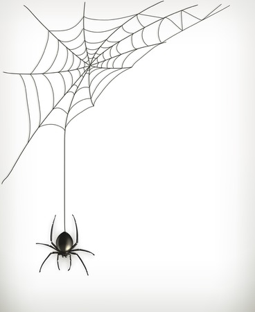 spiders: Spider web vector