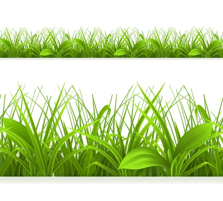 Spring green grass, seamless border. Detailed vector illustration Vector