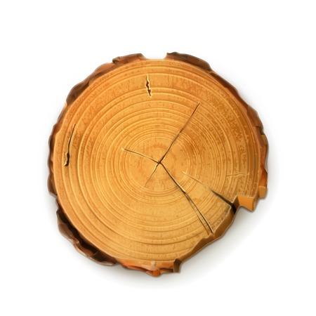 circulos concentricos: Tocón de árbol, corte redondo con anillos vector anual Vectores