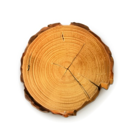 tronco: Toc�n de �rbol, corte redondo con anillos vector anual Vectores