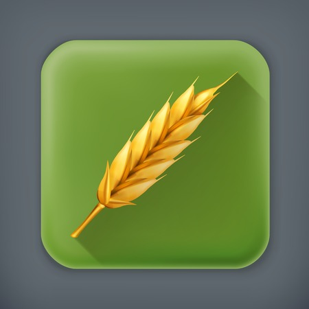 bran: Wheat, long shadow vector icon