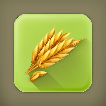 winter wheat: Wheat, long shadow vector icon