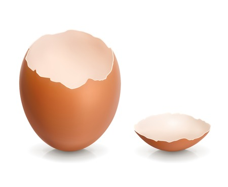 Eggshell Illustration