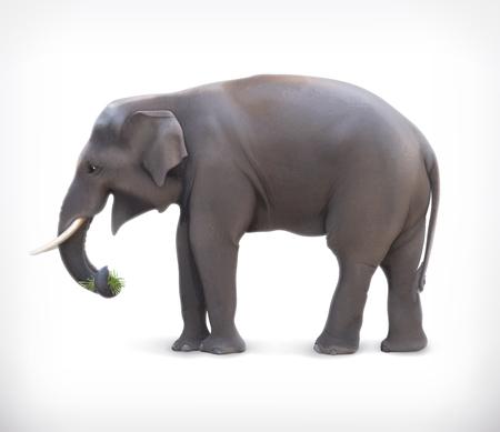tusk: Elephant Illustration