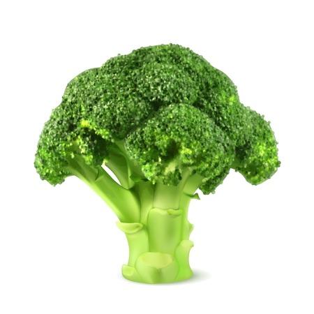 新鮮な緑のブロッコリー、イラスト