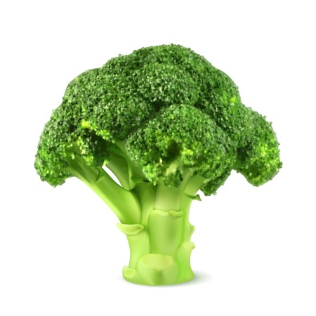broccoli salad: Fresh green broccoli, illustration Illustration