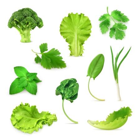 Los vegetales verdes y hierbas conjunto, comida vegetariana orgánica, ilustración vectorial aislados en fondo blanco