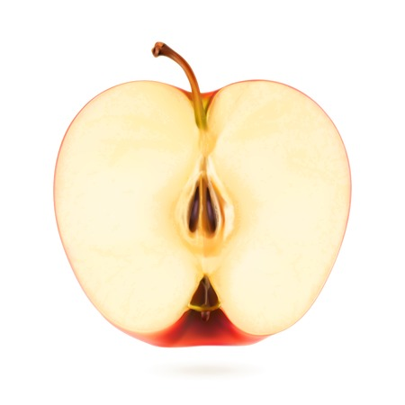 isolated on a white background: Half apple, vector illustration