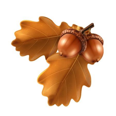 acorns: Oak branch with acorns, vector illustration