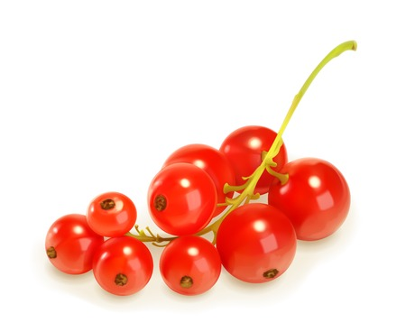 red currants: Redcurrant berries, vector illustration
