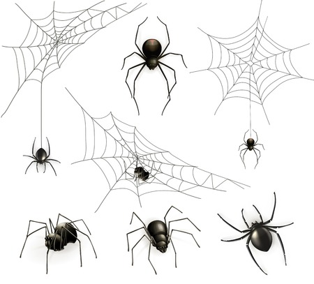 spider cartoon: Spiders and spider web, vector set