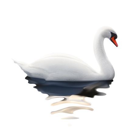 reflection in water: Swan, vector illustration