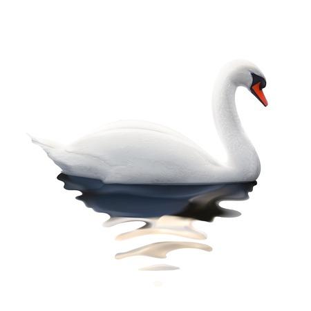 swimming swan: Swan, vector illustration
