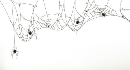 spidery: Spiders and spider web, vector set