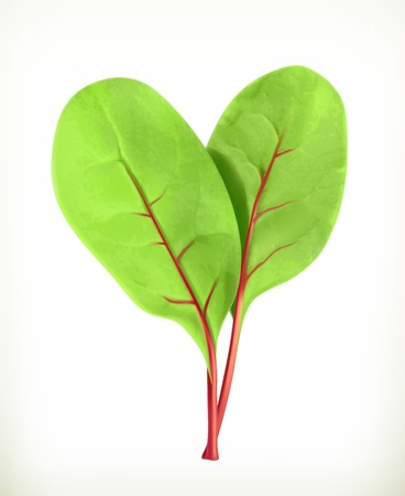 beetroot: Baby beetroot leaves, vector illustration