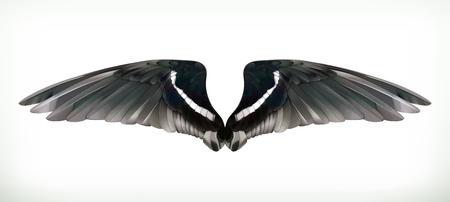 corvo imperiale: Ali illustrazione vettoriale
