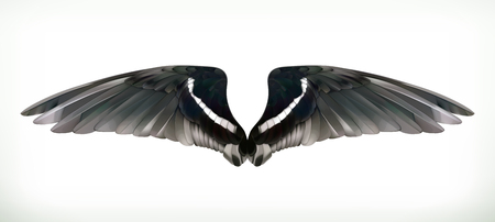 gothic angel: Wings vector illustration