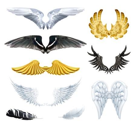 cisnes: Alas, ilustraciones vectoriales set