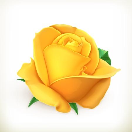 Rose flower illustration Banque d'images - 35065917