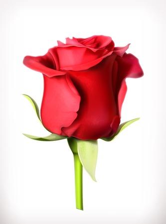 Rote Rose Vektor-Illustration Standard-Bild - 36963781