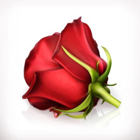 3d flower: Red rose vector illustration Illustration