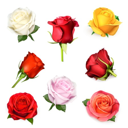 red and white: Roses vector set