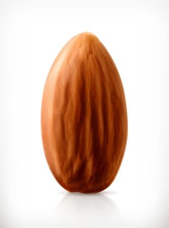 amande: Almond, vecteur, ic�ne