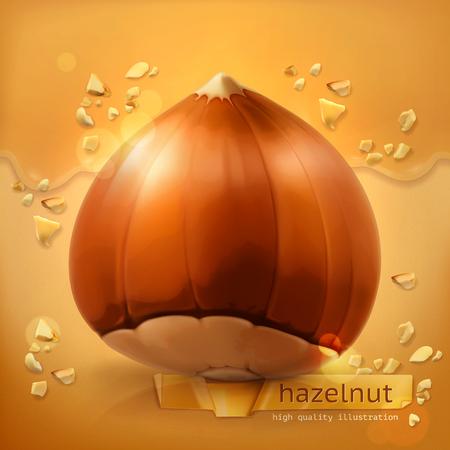 hazelnut: Hazelnut, vector background