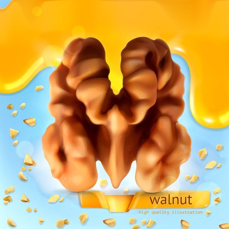 nutty: Walnut, vector background Illustration